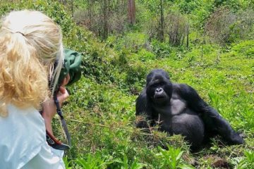 my customer doing rwanda Gorilla trekking
